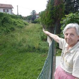 «Nessuno taglia l'erba a Cantù  e trovo le vipere in casa»