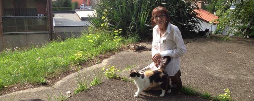 """Erba, la """"gattara"""" è in ospedale  Mobilitazione per gli animali"""