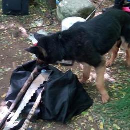 Spaccio di droga dei boschi  Un arresto a Cadorago