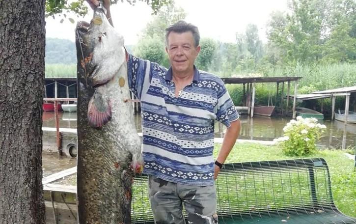 Catturato ad Alserio  pesce siluro di 40 kg