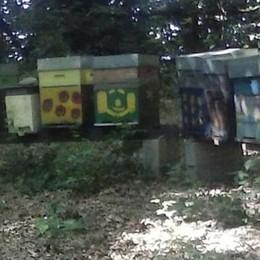 Rubate cinque arnie con le api  Ladri di miele in azione di notte