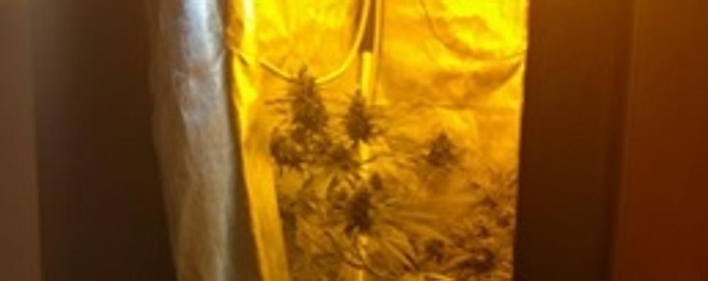 Marijuana coltivata  nella serra indoor  Denunciato a 69 anni