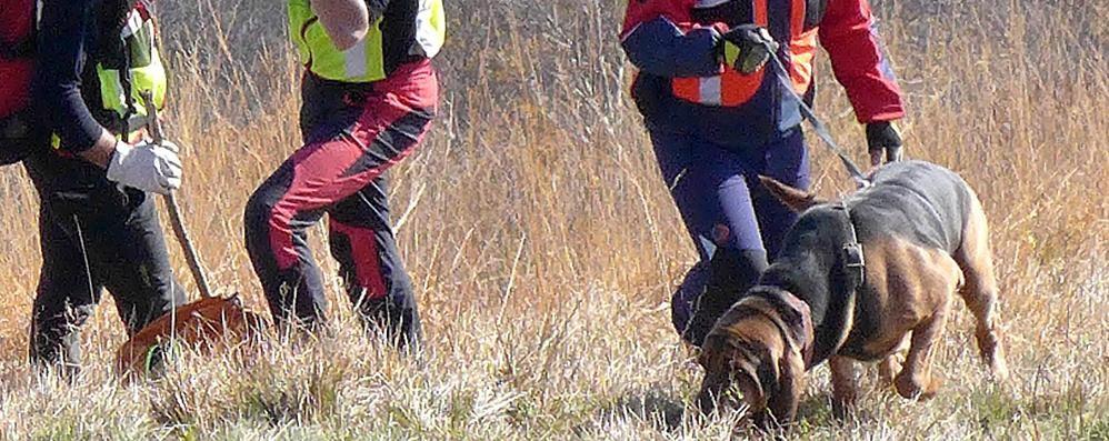 """Donna scomparsa ad Alzate  Arrivano i cani dal """"super fiuto"""""""
