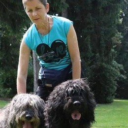 Dal Comasco i cani più belli del mondo  Sono pastori bergamaschi allevati a Fino