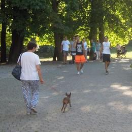 «Cani al parco, rispettate le regole»  A Erba multe fino a 550 euro