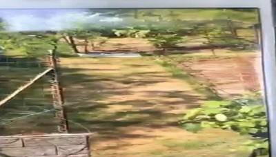 L'avvistamento a Casnate: forse è il puma