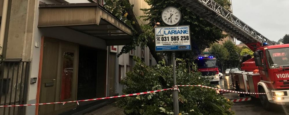 Como, albero cade sul cinema Astra  Intervengono i vigili del fuoco