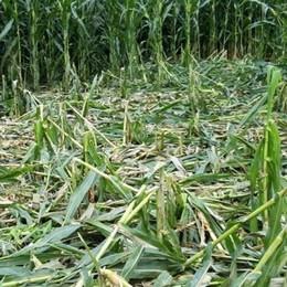 Cinghiali, agricoltori furiosi  «Solo parole, faremo da soli