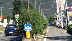Dovevano essere piante ornamentali  «Ma le strade di Erba sono una giungla»