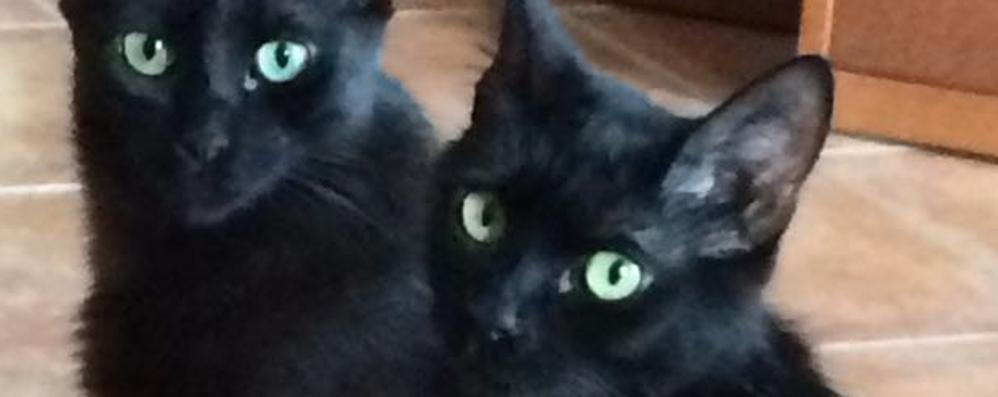 uomo e nulla spariti nel gatti segnalazioni Olgiate un Altre xY7qOz8w