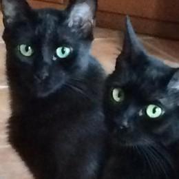 Olgiate, gatti spariti nel nulla  Altre segnalazioni e un uomo misterioso