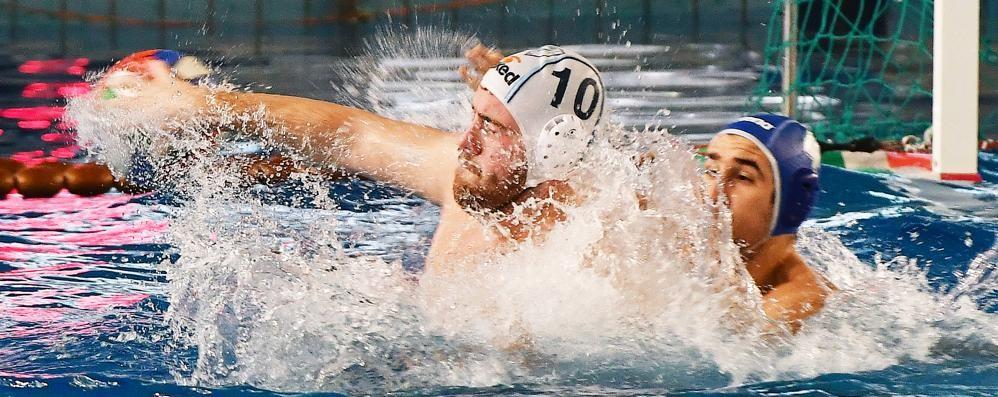 Como Nuoto, il centenario  si apre con una sconfitta