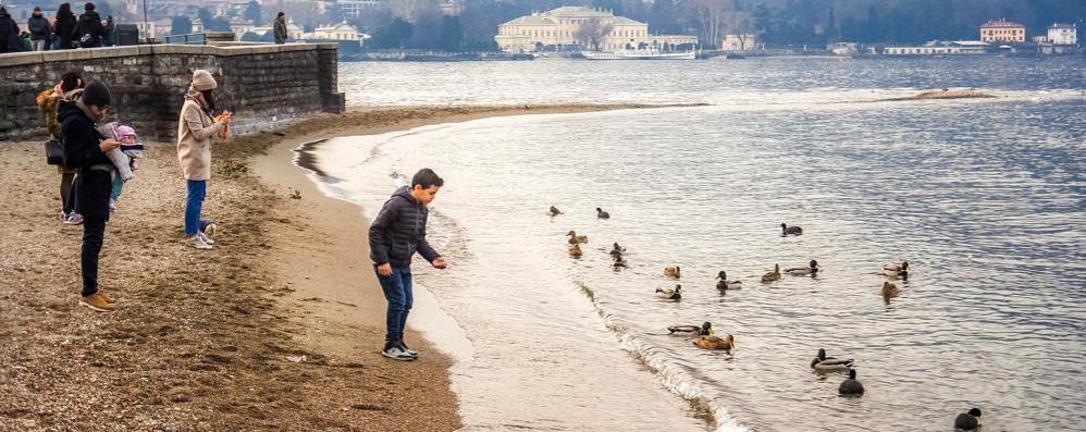 Como, è allarme siccità   Lago sempre più basso
