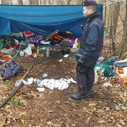 Trovato un altro boschetto della droga  Sotto la tenda 700 grammi di hascisc