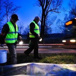 Torna il trasporto dei rospi  Montorfano cerca volontari
