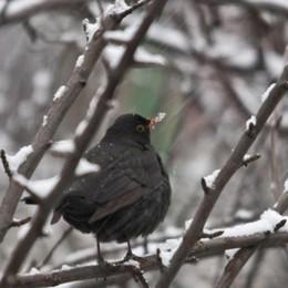Maltempo in arrivo con pioggia e neve  A Como sono i giorni della merla