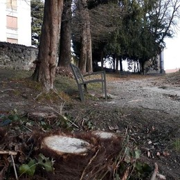 """A Cantù le potature """"antispaccio""""  «Via i nascondigli dal parco Argenti»"""