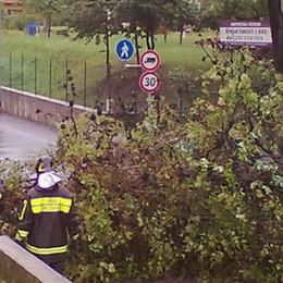 Cantù, piano da 100mila euro per il verde  «Cento alberi malati da abbattere»