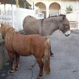 Storia del pony e dell'asinello  che non vogliono stare in recinto
