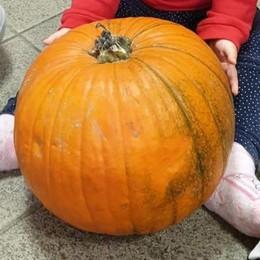 Un furto rovina la festa ai bimbi  Sparita la zucca di Halloween
