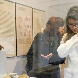 Gli studenti vogliono visitare il museo  Como, ma il Comune glielo vieta