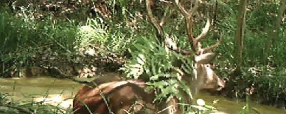 Sparano e decapitano cervo  Bracconieri horror a Appiano