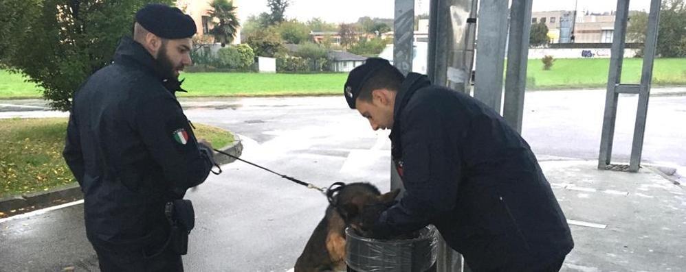 Cantù, cani antidroga fuori dalle scuole  I presidi: «Ci saranno altri controlli»