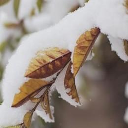 Brr!!! Ma che freddo fa  Ed è in arrivo la neve