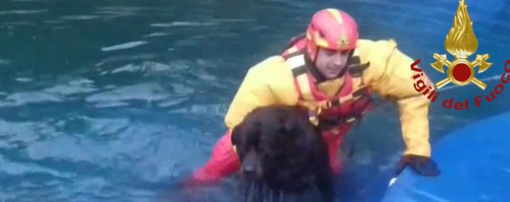Cane rischia di annegare  Salvato dai pompieri