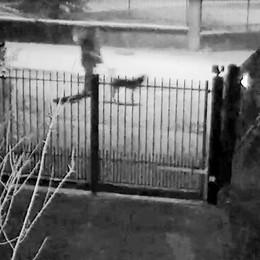 Ancora ladri nel Marianese  Rubano persino le luci di Natale   GUARDA IL VIDEO