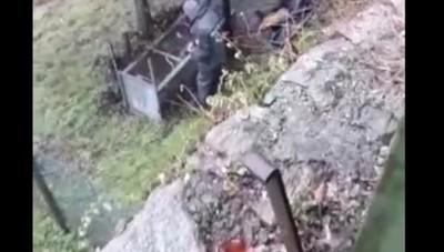 La liberazione del cervo intrappolato