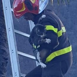 Il gatto sale sulla palma  e non vuole scendere  Ci vogliono i pompieri