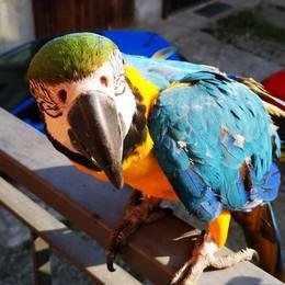 Il pappagallo fa gli auguri  E diventa star del web