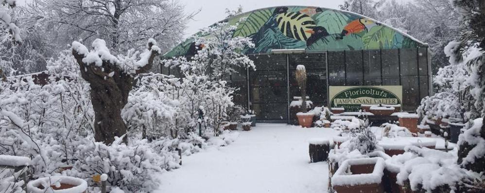 Campagne in bianco  Agricoltori di Como e Lecco  sotto la neve