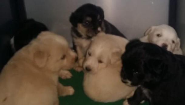 Mariano, 7 cuccioli abbandonati   con la mamma in un fossato