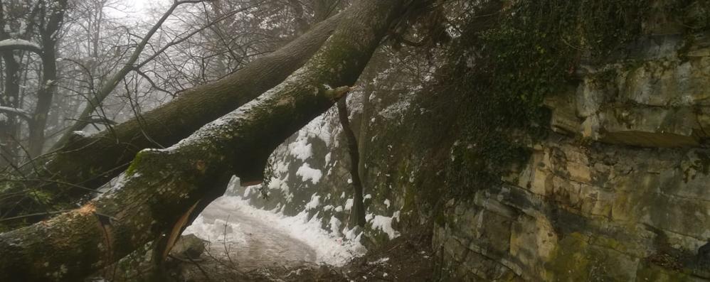 Neve, cade pianta sulla strada  Chiusa la provinciale per Veleso
