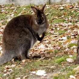 Stop visite sull'Isola dei Cipressi  «Rischiamo  multe per i canguri»