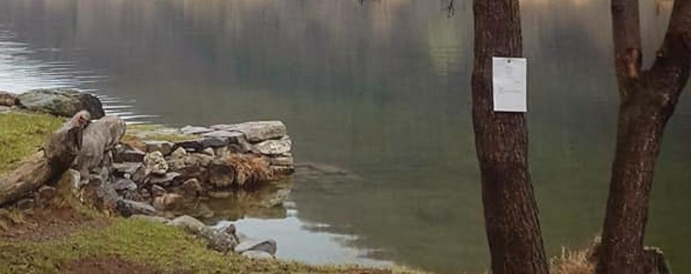 Poesie appese agli alberi  sui sentieri del Segrino  «Omaggio a luoghi cari»
