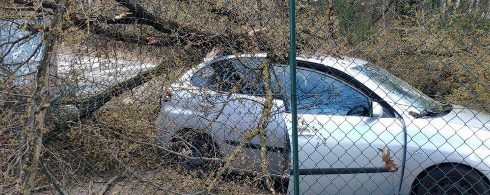 Albero cade su un'auto all'uscita da scuola  Paura per una mamma e la sua bambina