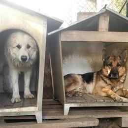 Tavernerio, minacce all'ex sindaco  «Fai stare zitti i cani o ci pensiamo noi»