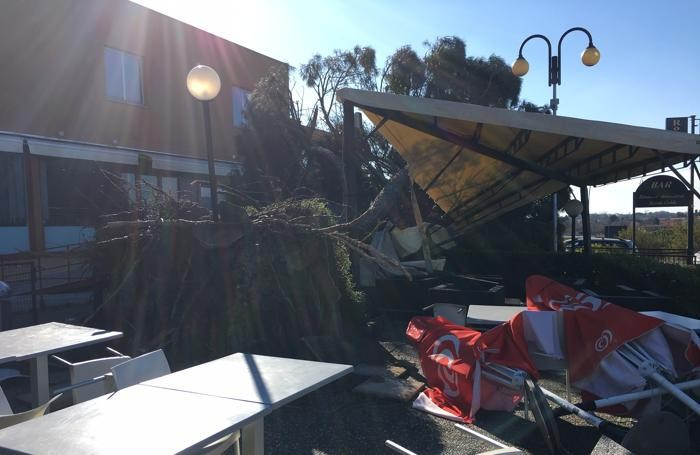 Il pino marittimo sradicato che ha distrutto il bersò del Royal Caffè di Orsenigo