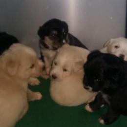 Si possono adottare i cuccioli salvati  «Sceglieremo i proprietari più adatti»