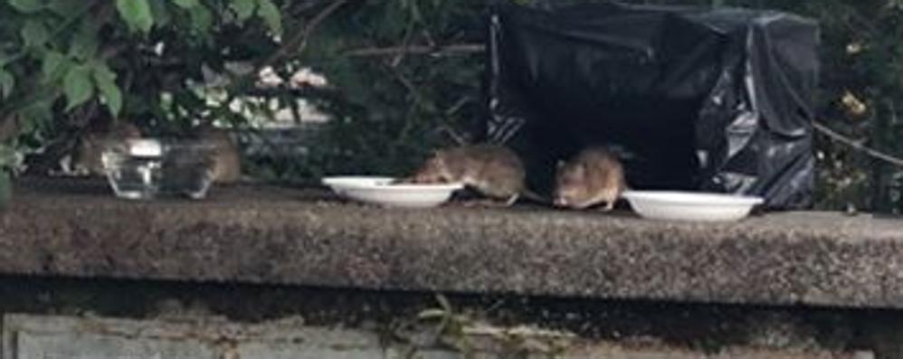 Topi e gatti convivono  Alla stazione di Grandate