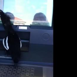 """Torno, il """"prelievo""""   della gazza ladra  al bancomat (video)"""