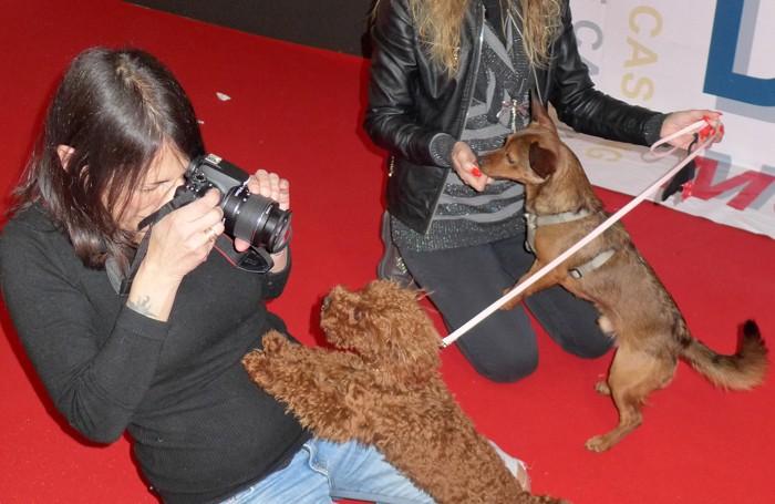 Il casting dei cani a Esotika