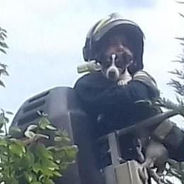 Cane bloccato sull'albero  Salvato dai Volontari di Fino