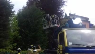 Fino cagnolino salvato dai Volontari