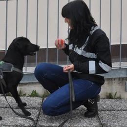 Mercoledrink in piazza a Cantù  I cani anti-droga controlleranno