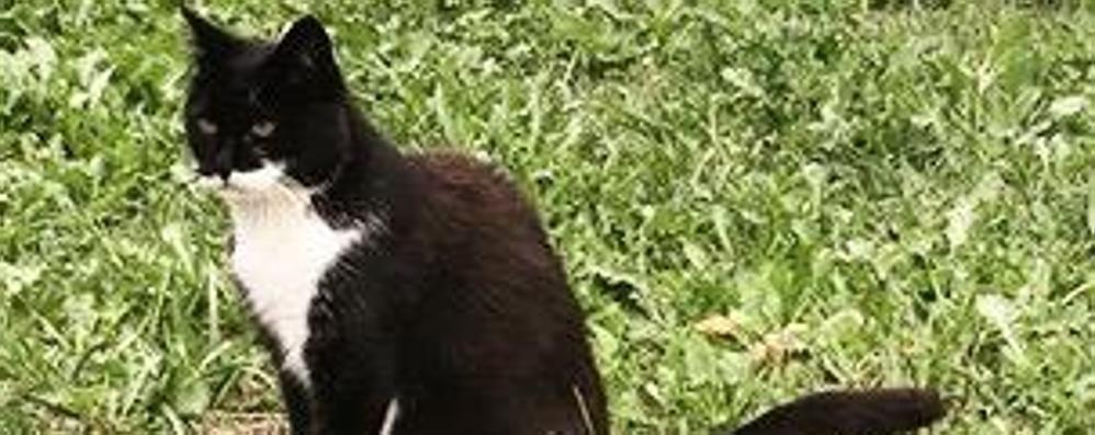 L'hanno uccisa a colpi di fucile  Ora è caccia al killer dei gatti