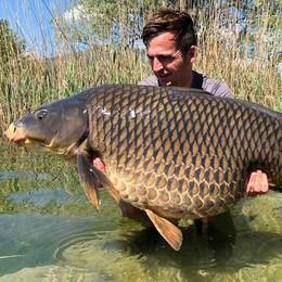 Una carpa di 31 chili  pescata nel lago di Pusiano